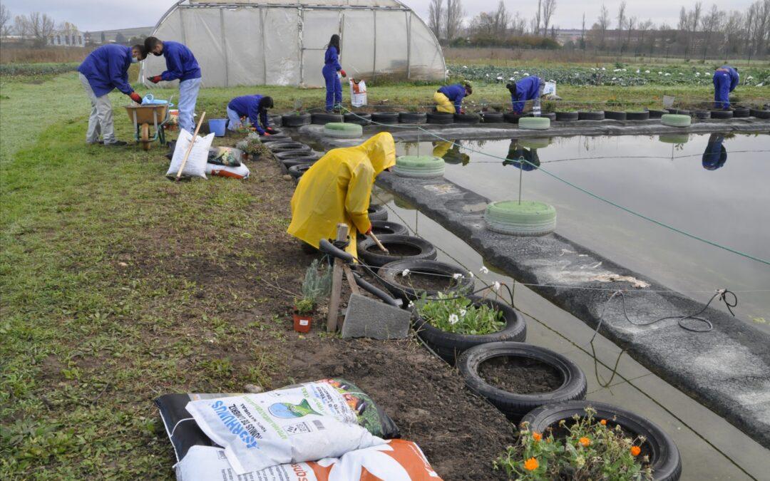 Curso de jardinería ecológica y diseño floral en Miranda